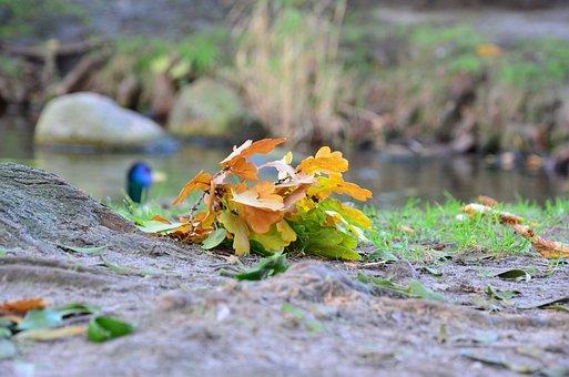 Autumn, Foliage, Autumn Gold, Collapse