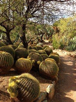 Barrel Cacti, Garden Path, Barrel, Cacti, Cactus
