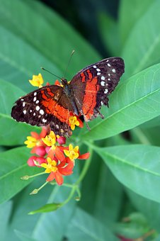 Butterfly, Bug, Insect, Nature, Wing, Fly, Monarch