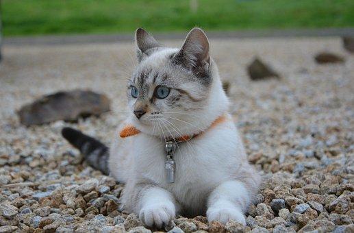 Cat, Kitten, Female, Cat Lying, Head Profile, Cat Eyes
