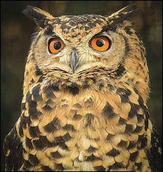 Owl, Wise, Eyes, Huge, Close Up, Knowledge, Character