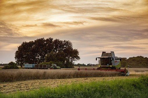 Harvest, Agriculture, Combine Harvester, Cereals