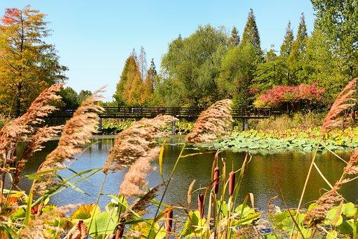 Incheon, Dream Park, Chrysanthemum Festival