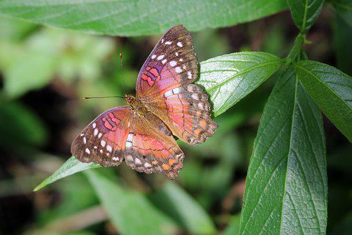 Butterfly, Bug, Insect, Nature, Wing, Fly, Colorful