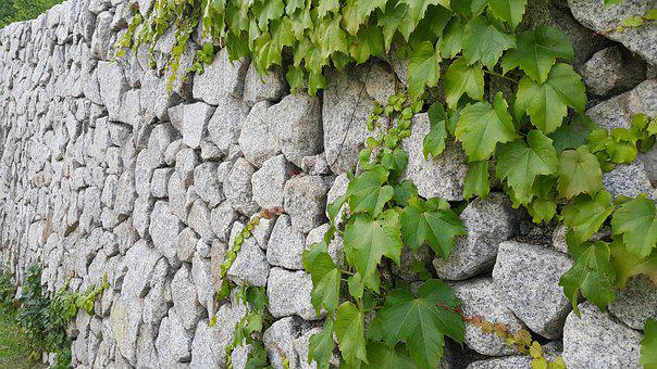 Stone Will, The Vine, Ivy, Wall, Wipes, Free Pictures