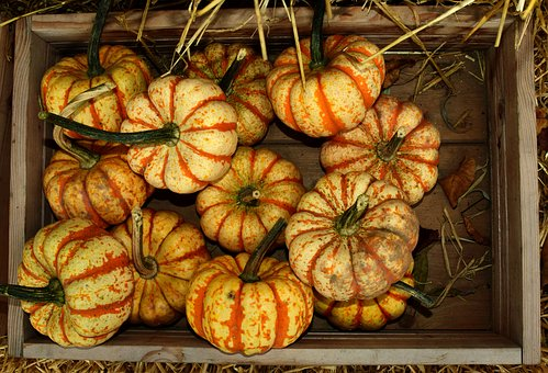 Pumpkin, Gourd, Autumn, Halloween, Orange