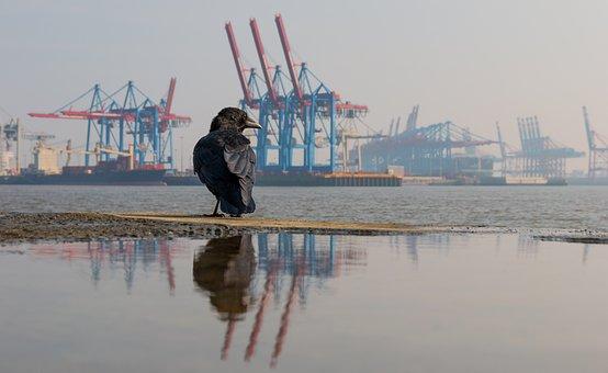 Hamburg, Elbe, Elbe Beach, Autumn, Port, Water