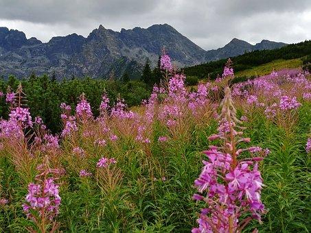 Tatry, Hall, Trail, Mountains, The High Tatras, Nature