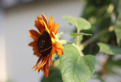 Summer, Flower, Plant, Light, Tree, Emotion, Large Leaf