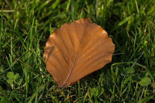 Leaf, Nature, Autumn, Green, Plant, Forest, Raindrop