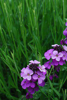 Wildflowers, Purple, Green, Flower, Summer, Botanical