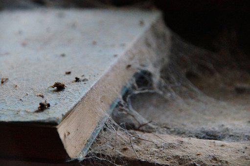 Book, Dusty, Forget, Old, Decay, Age Ham, Unread