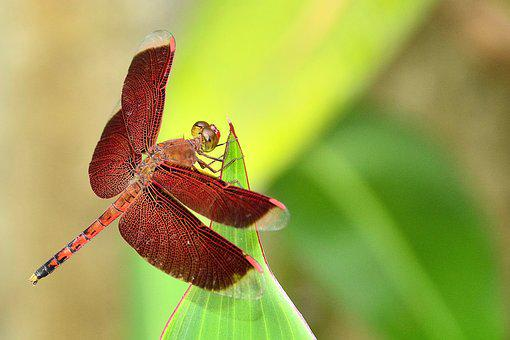 Dragonfly, Insect, Garden, Park, Nature, Animal