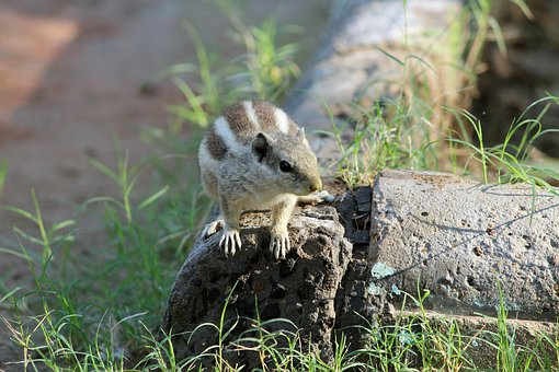 Squirrel, Nature, Love, Animal, Summer, Wildlife