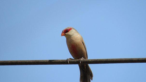 Birds, Nature, Animals, Tropical Birds, Birdie, Freedom