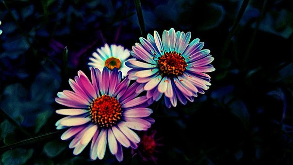 Flower, Neon, Effect, Nature, Color, Colorful, Bright