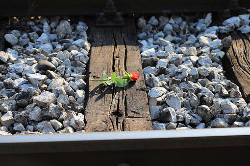 Yellow Red Rose On Railway, Loving Memory, Condolence