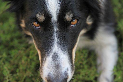 Dog, Pet, Farm, Border Collie, Outside, Love, Quote