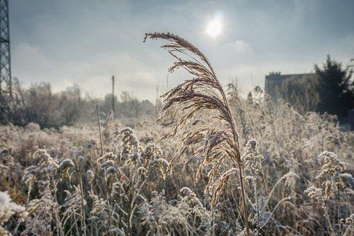 Winter, Frost, The Ecclesia, Frozen, Nature, Sunrise