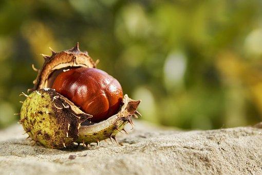 Autumn, Chestnut, Open, Fruit, Nature, Spur, October
