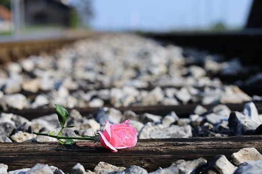 Pink Rose On Railway, Loving Memory, Condolence