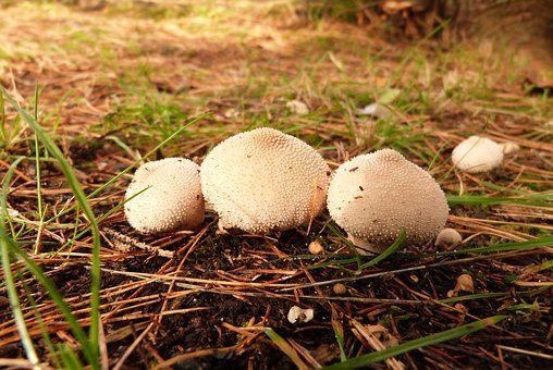 Mushrooms, Forest, Enchanted, Nature, Fairytale