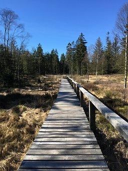 Moor, Wood, Web, Nature Reserve, Landscape, Moorland