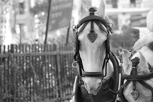 Horse, Neigh, Animal, Portrait, Stallion, Nature