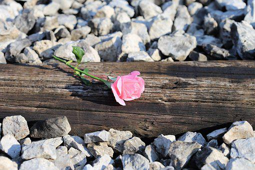 Pink Rose On Railway, Natural, Outdoors, Rail, Bud