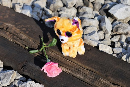 Sad Kitty On Rail, Stop Children And Teenager Suicide