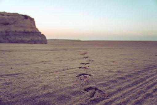 Sand, Sunset, Seagull, Footprint, Animal