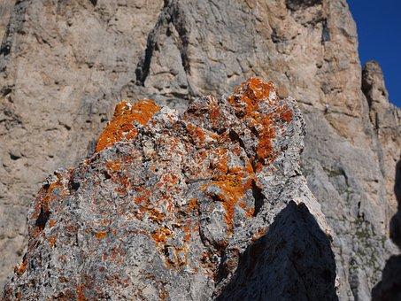 Lichen, Orange, Fouling, Rock, Stone, Xanthoria Elegans