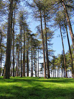Trees, Tall, Sky, Reaching, Forest, Wood