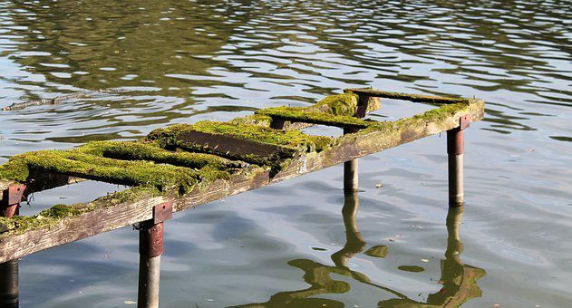 Steeg, Moss, Nature, Weathered, Autumn, Fouling