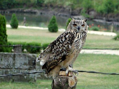 Sowa, Bird, Pharaoh Eagle Owl, Claws, Beak