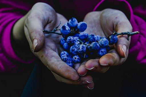 Berry, Blue Berries, Autumn Nature, Girl, Hands