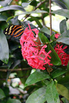 Butterfly, Yellow, Orange, Branch, Leaf, Leaves, Green