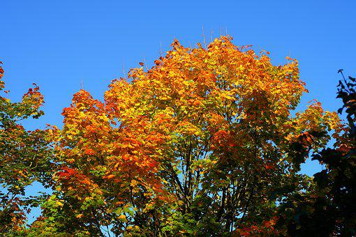 Tree, Leaves, Colorful, Autumn, Discoloration, Branches