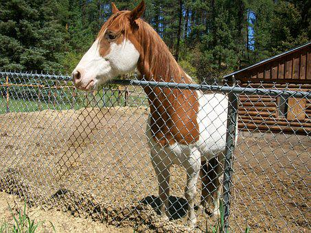 Friendly, Horse, Ranch