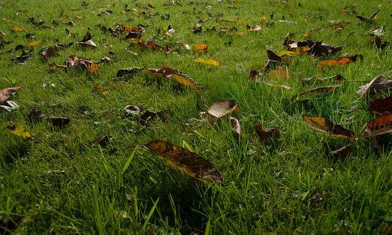 Autumn, Leaves, Natural Lawn, Fall Foliage, Grass, Rush