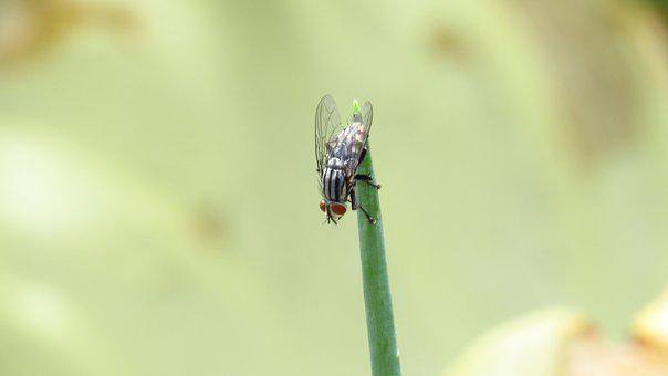 Fly, Insect, Fly The Brazilian, Chives