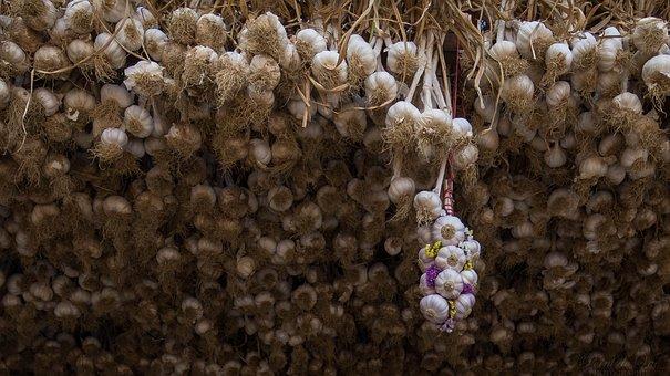 Pink Garlic, Lautrec, Tarn, Occitania, France, Europe