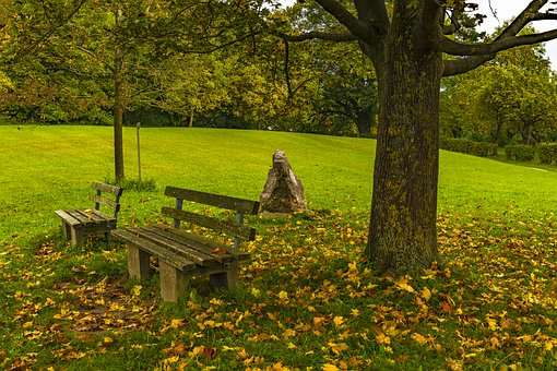 Bank, Autumn, Resting Place, Leaves, Forest, Rest