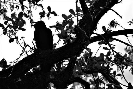 Raven, Bird, Crow, Animal, Black, Nature, Symbol, Dark