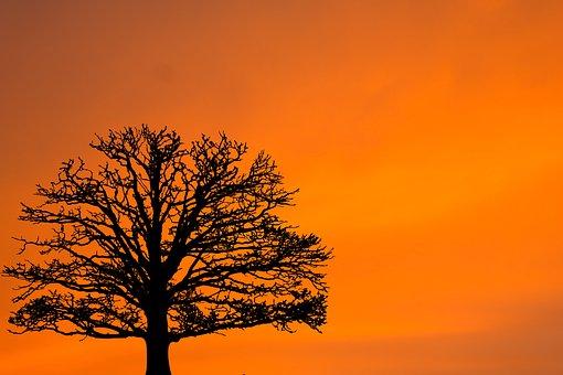 Sunset, Sunrise, Tree, Silhouette, Winter, Nature, Sky