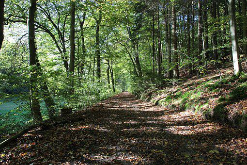 Forest Path, Autumn, Oak, Forest, Nature, Trees