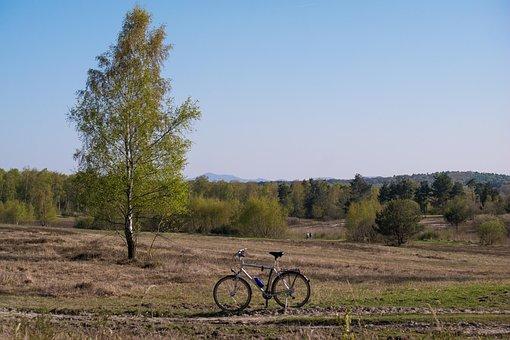 Birch, Bike, Siebengebirge, Mount Of Olives