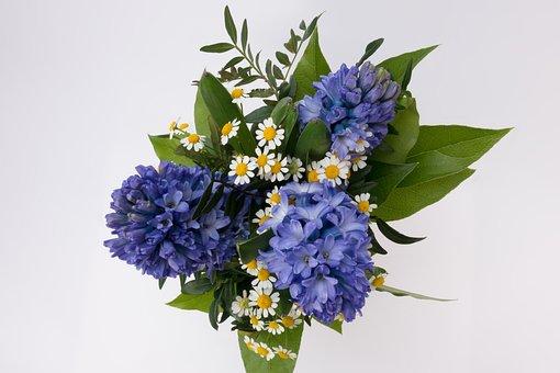 Bouquet, Hyacinth, Hyacinthus Orientalis, Asparagaceae