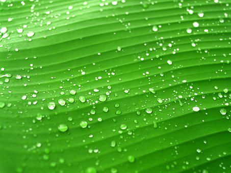 Water, Drops, Leaf, Grass, Green, Dew, Rain, Closeup