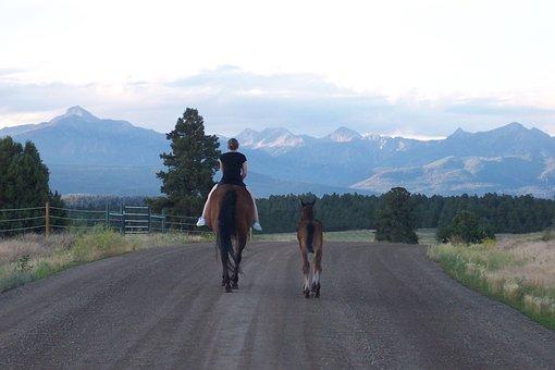 Mare, Foal, Road, Mountains, Pagosa Springs, Colorado